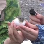 We have now established how Nakajima Saki touches testicles!